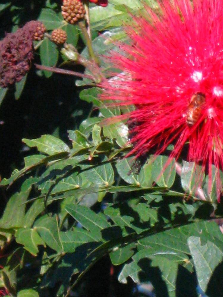Caring for self: Haiku for Healing (3/5)