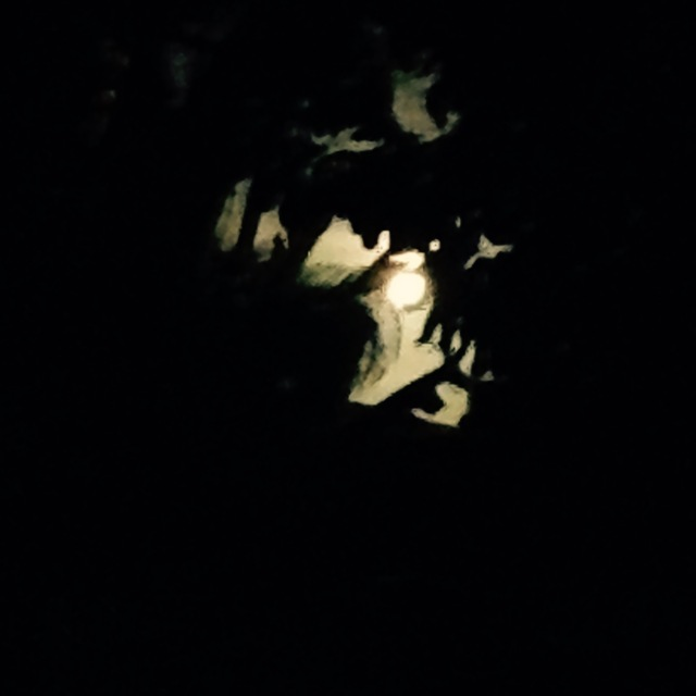 full-moon-through-trees